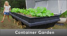 Raised garden bed kits that are self-watering with a wicking bed design, elevated and portable with a greenhouse cover, it's chemical free, easy gardening. Self Watering, Plants, Garden, Greenhouse Cover, Garden Beds, Flowers, Container Gardening, Easy Garden