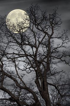 Treetop Moon by Gene Linzy