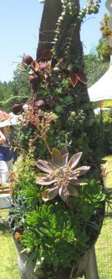 I spent the day at the Los Angeles County Arboretum last week attending the L.A. Garden Show and touring the display gardens and marketplace there. I was impressed with some clever succulent plante...