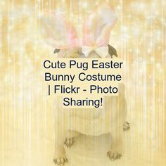 Cute Pug Easter Bunny Costume | Flickr - Photo Sharing! Cute Baby Cats, Cute Cats And Dogs, Cute Pugs, Cute Puppies, Funny Babies, Funny Dogs, Cute Babies, Easter Bunny Costume, Cute Baby Videos