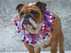 Check out our new line of smoochers! Your pet will love these! Get yours here! Rodies.Storenvy.com