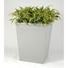 "Allied Molded Products Boca Square Pot Planter Size: 33"" H x 29"" W x 29"" D, Color: White Honey"