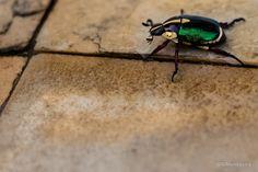 Bug by Bibiana Mandagará