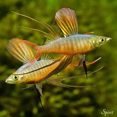 How To Get Started With Salt Water Fishing – Fanel Sport Tropical Freshwater Fish, Tropical Fish Aquarium, Freshwater Aquarium Fish, Planted Aquarium, Salt Water Fish, Salt And Water, Fresh Water, Aquariums, Orcas