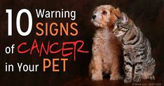 Mammary gland cancer, lymphoma, mast cell tumors, and bone cancer are the most common cancer types in pets. http://healthypets.mercola.com/sites/healthypets/archive/2014/11/19/common-types-pet-cancer.aspx