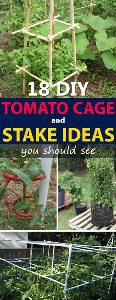 Searching for some really prudent and practical DIY tomato cage, trellis, and stake ideas to support tomato plants? This post is your stopper!