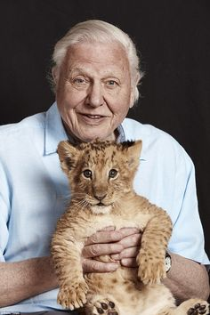 Beloved: Sir David Attenborough, who marks a remarkable 65 years on TV next year, will be the most frequent face on our screens over the festive New Year period Primates, Animals And Pets, Baby Animals, Men With Cats, Lion Cub, Cat People, Animal Kingdom, Famous People, Cat Lovers