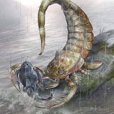 Pterichthyodes being eaten by giant Sea Scorpion Pterygotus… Prehistoric Wildlife, Prehistoric World, Prehistoric Creatures, Prehistoric Timeline, Dinosaur Fossils, Dinosaur Art, Fantasy Creatures, Sea Creatures, Extinct Animals