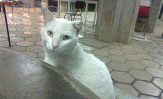 Associação de animais denuncia morte de gatos na UFMG