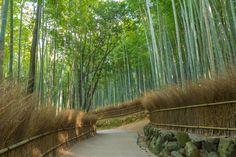bamboo forest by Ryusuke Komori on 500px