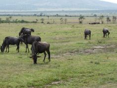 African Home Adventure Safaris Photo Gallery