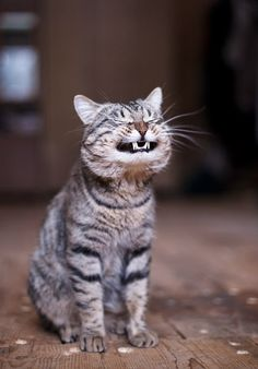 "Happy cat says ""Cheese!"""