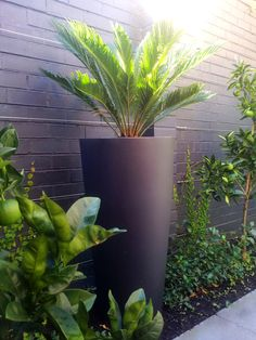 One statement pot is all you need to create the wow factor in a small garden
