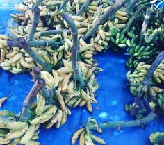 Bananas anyone? I am surprised to see so many native varieties of bananas because all one gets to see in the markets in Bengaluru these days.