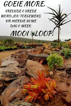 Afrikaanse Quotes, Goeie Nag, Goeie More, Morning Inspirational Quotes, Good Morning Messages, Verses, Poems, Advice, Thoughts