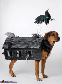 Haunted House Dog - 2012 Halloween Costume Contest #dogcostume #haunteddog
