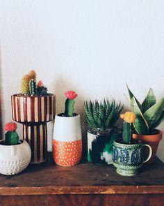 Não existe um tipo de vaso específico para se cultivar cactos ou suculentas, na verdade é possível cultivar estas belas espécies em qualquer tipo de recipiente e até mesmo diretamente no solo. Escolhendo um recipiente bem ornamental podemos valorizar ainda mais a beleza destas belas espécies, suas cores, tamanhos e formatos.
