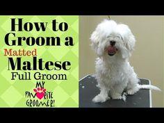 Videos Maltese Dog: Grooming a Maltese Matted Dog Grooming Clippers, Poodle Grooming, Pet Grooming, Maltese Haircut Short, Puppy Haircut, Morkie Puppies, Yorkshire Terrier Puppies, Maltese Poodle, Maltese Dogs