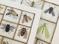 Golly Bard's Drawing Room: Studio | Pollinators Peek