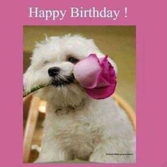 Guess who 💞 you Bro Your Sis Happy Birthday Ralphi Live Lily 🐦 Happy Birthday Puppy, Funny Happy Birthday Wishes, Happy Birthday Video, Happy Birthday Wishes Cards, Happy Birthday Flower, Happy Birthday Pictures, Birthday Blessings, Happy Birthday Wallpaper, Messages