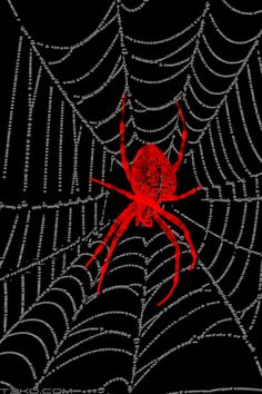 Corrinas IPhone Wallpaper Theme Pack 4 BooPack Iphone Themes Spider Webs