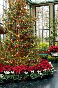 Christmas tree- it looks like its in a very expensive undercover area, but what a great idea maybe if i were rich :)!!! Bebe'!!! Gorgeous Christmas Tree with ornate ornaments and surrounded at it's base by Red Poinsetias and Green and White Cyclamen!!! This tree is perfect for a Sunroom or Greenhouse!!!