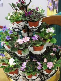Miniature African violets in pots look Pretty & Sweet displayed in a Tiered cupcake tree.Cute Garden Party Centerpiece, that can be Favors also! Violet Plant, Violet Garden, Saintpaulia, Tropical Landscaping, Plant Holders, Pansies, Houseplants, Container Gardening, Indoor Plants