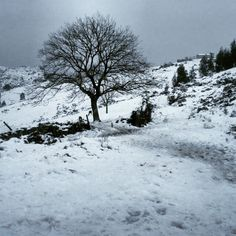 Preciosos los paisajes que nos deja la nieve ;) #Winter #Snow #Cantabria #LaGranja #Nieve #CastroUrdiales #Invierno