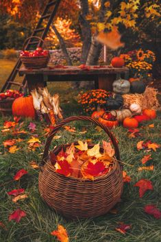 Fall Pictures, Fall Photos, Fall Season Pictures, Fall Pics, Fall Background, Autumn Scenes, Autumn Cozy, Happy Autumn, Autumn Aesthetic