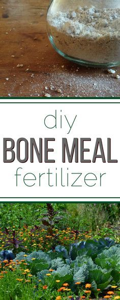 Gardening Tips Really easy step-by-step for making your own bone meal fertilizer for a healthier garden! - How to make bone meal for a better garden! It's so easy to make your own bone meal from leftover bones! Organic Vegetables, Growing Vegetables, Growing Tomatoes, Organic Insecticide, Organic Gardening Tips, Vegetable Gardening, Gardening Blogs, Gardening Services, Veggie Gardens