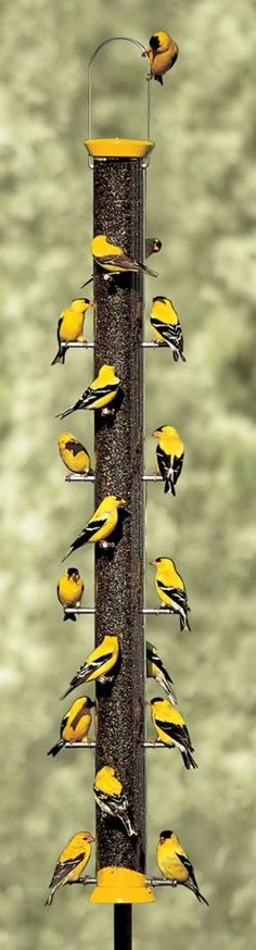 Popular Finch Feeder. The bright yellow really DOES attract yellow finches. How they love their thistle inside! Just be careful it doesn't get moldy. Keep an eye on the contents.