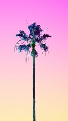 Palm sunset iPhone wallpaper
