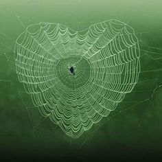 ~Spider web heart~ Nature is trying to tell us. heart each other. Let's forgive & forget and the world will be a better place for all ♡ Heart In Nature, Heart Art, I Love Heart, Happy Heart, Heart Pics, Heart Pictures, Photo Heart, Love Symbols, Pics Art