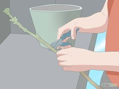 Grow Hydrangea from Cuttings Step 6.jpg