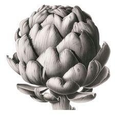 Artichoke Head in Charcoal - Susannah Blaxill