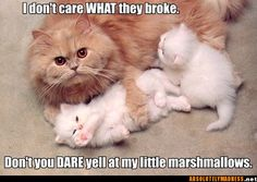 Find great deals for Funny Cute Cats Animal Photo Fridge Magnet Collectibl - Funny Cat Quotes Funny Animal Quotes, Animal Jokes, Funny Animal Pictures, Cute Funny Animals, Cute Baby Animals, Cute Cats, Cat Fun, Funniest Animals, Funny Sayings