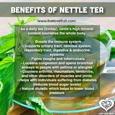 Benefits of Nettle Tea