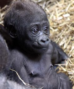 The Gorilla Trades Stock Investing System #stockpicks #profit #money #stocks #NYSE #gorillatrades