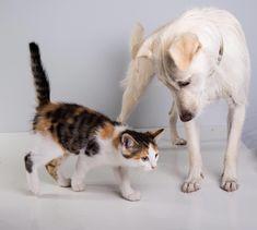 Dog meets kitten #dog #cat #kitten #pets #animals #friends #cute #photoshooting Dog Cat, Kitten, Passion, Pets, Friends, Animals, Cute Kittens, Amigos, Kitty
