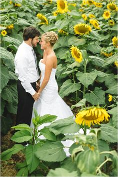 Sunflower field wedding photos in Dandridge, TN, and Angelo's at the Point wedding by JoPhoto Knoxville wedding photographers. Wedding Photoshoot, Wedding Pics, Wedding Engagement, Summer Wedding, Wedding Ideas, Engagement Pics, Protea Wedding, Floral Wedding, Rustic Wedding