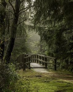 🇺🇸 Footbridge in the park on a wet day (Oregon) by Sherry Levasseur on Oregon Vacation, Oregon Travel, Lincoln City Oregon, Oregon Coast, Oregon Usa, Belleza Natural, Travel Images, The Great Outdoors, State Parks