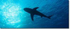 « Les résultats se manifestent en exploitant les opportunités, et non en dénouant les problèmes. » – Peter Drucker      «  Les requins exploitent les opportunités, tandis que les artisans résolvent les problèmes! » – Michel A. Di Iorio      LES REQUINS et l'ARTISAN...  - Lisez ma réflexion à: http://lacoulisse.ca/requins/#sthash.izvKHHW2.dpuf