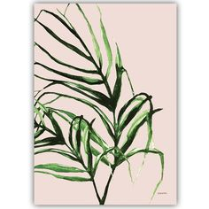 plants rose – papurino sisustus Plant Leaves, Walls, Rose, Plants, Wands, Roses, Plant, Planting, Planets