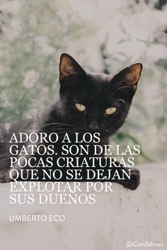 20160220 Adoro a los gatos. Son de las pocas criaturas que no se dejan explotar por sus dueños - Umberto Eco @Candidman pinterest