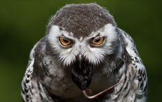 Photo eye to eye by Gianluca Mariani Nature Photographer natura 2.8 on 500px