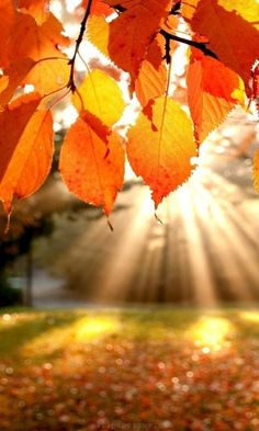 sun's rays on autumn leaves