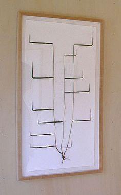 Herbarium proprius