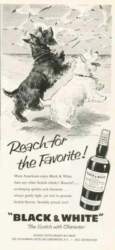 Black & White Scotch Ad Reach for the Favorite (1959)
