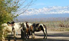 Bodega Ojo de #Vino | #Dieter #Meier (Agrelo, #Mendoza)