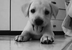 The Hi!! | The 40 Cutest GIFs In The History Of The Internet.  So wonderful!